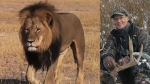 150729120832-cecil-lion-hunter-palmer-split-large-169